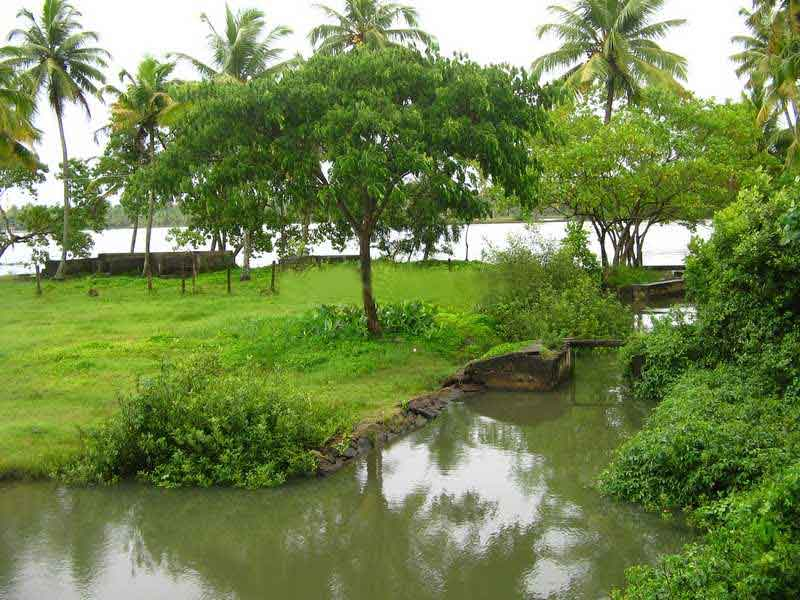 Download this Natural Beauty Kerala picture